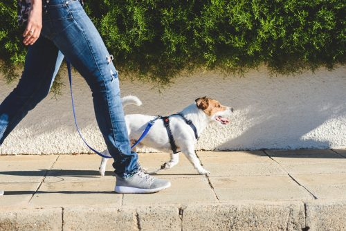 Walking the Dog - Take a Walk and Get Some Fresh Air